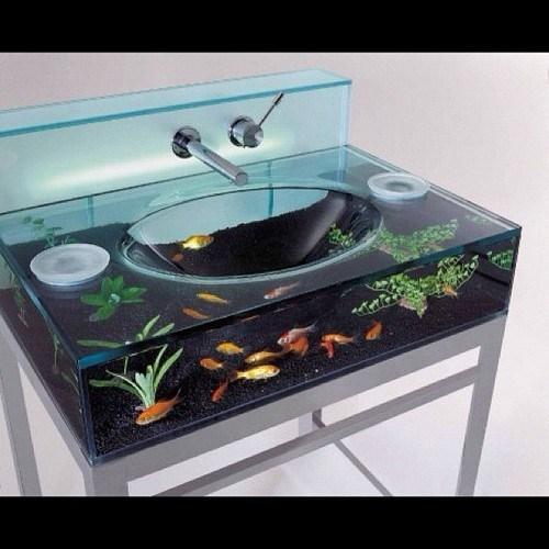sink,aquarium,fish
