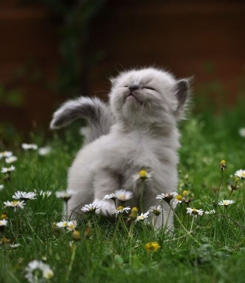 Cats,kitten,cyoot kitteh of teh day,flowers,grass,Weeds,smelling