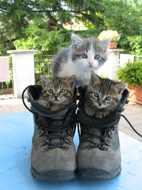 Cyoot Kittehs of teh Day: Puss-in-Boots Pyramid