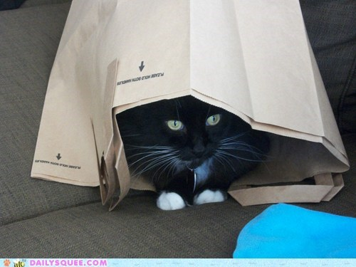 Reader Squee: Cat in a Bag!