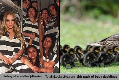 lindsay lohan and her jail mates Totally Looks Like this pack of baby ducklings