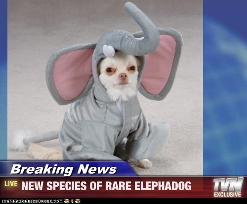 Breaking News - NEW SPECIES OF RARE ELEPHADOG