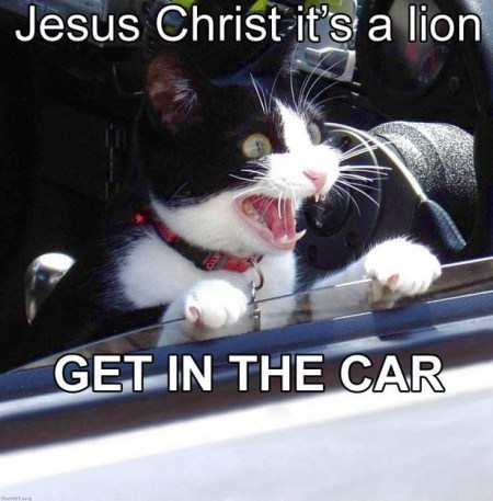 classics,jesus christ,lion,car,get in the car,Cats,captions