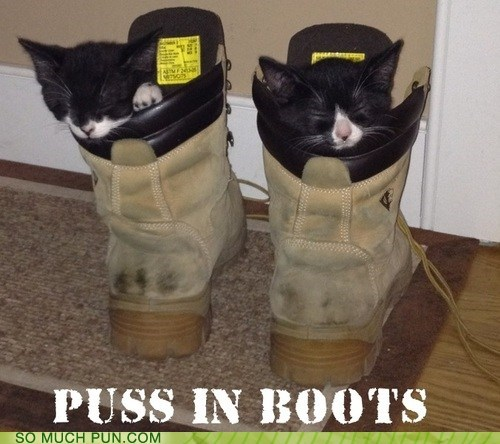 cat,Cats,kitten,puss n boots,literalism,double meaning,boots