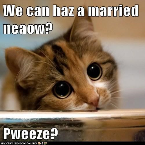 We can haz a married neaow?  Pweeze?