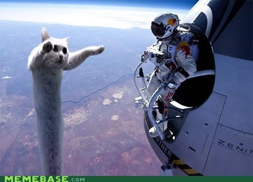 longcat,redbull,space jump