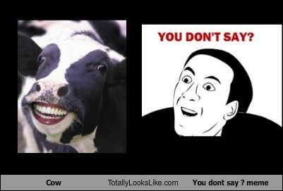 Cow Totally Looks Like You dont say ? meme