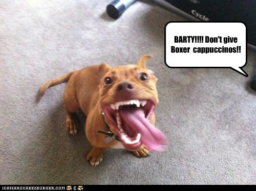 BARTY!!!! Don't give Boxer  cappuccinos!!