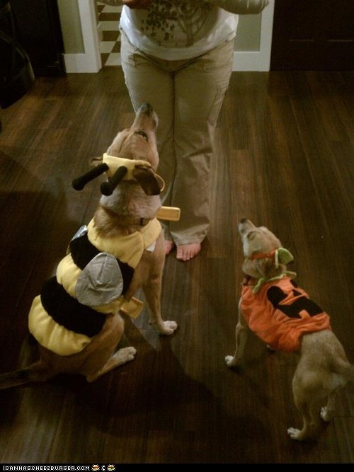 #1 - Madison and Bandit as a bee and a pumpkin