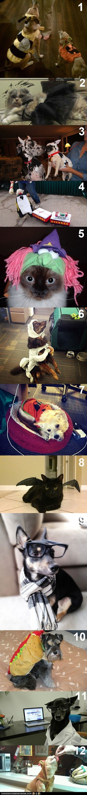 Vote for Your Favorite Cheezburger Employee Pet Halloween Costume!