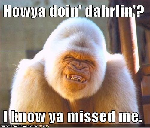 Howya doin' dahrlin'?  I know ya missed me.