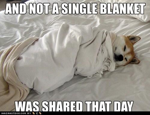blanket,shiba inu,jindo,cold weather,winter,lazy
