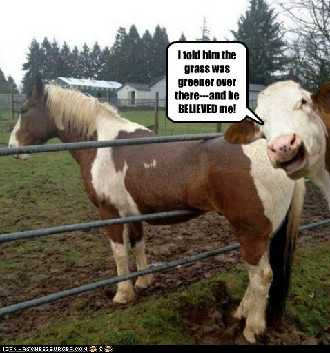 cow,stuck,grass is greener,laughing,trick,horse