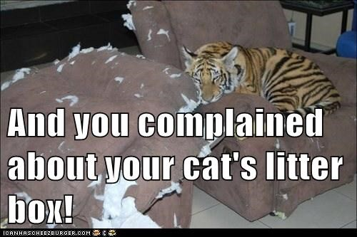 And you complained about your cat's litter box!