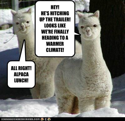 trailers,llama,alpaca,warmer,lunch pun,moving