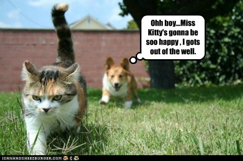 dogs,foiled again,corgi,escaped,fighting,angry,Cats