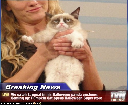 Longcat Breaking News