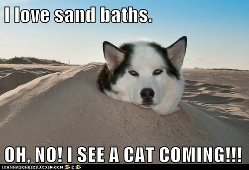 I love sand baths.  OH, NO! I SEE A CAT COMING!!!