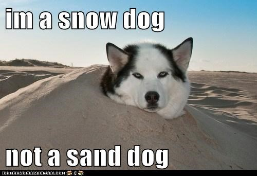 im a snow dog  not a sand dog