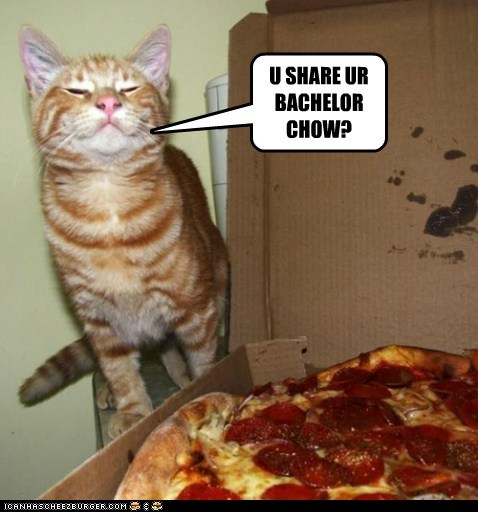 bachelor,bachelor chow,pizza,delivery,Cats,captions,food,share