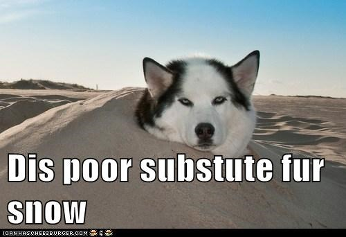 Dis poor substute fur snow