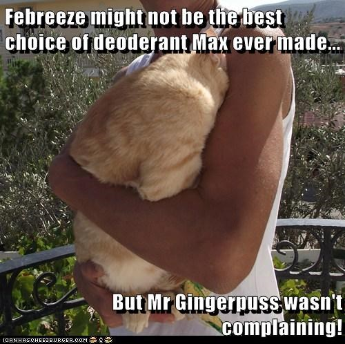 Febreeze might not be the best choice of deoderant Max ever made...  But Mr Gingerpuss wasn't complaining!