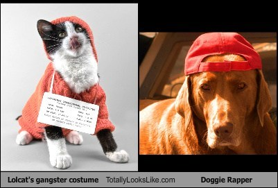 Lolcat's gangster costume Totally Looks Like Doggie Rapper