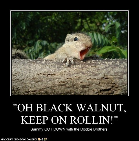 """OH BLACK WALNUT, KEEP ON ROLLIN!"""