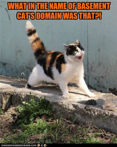 WHAT IN THE NAME OF BASEMENT CAT'S DOMAIN WAS THAT?!