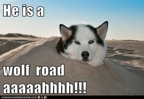 He is a  wolf  road aaaaahhhh!!!