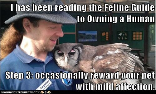 guide,reading,reward,affection,owls,human,Cats,hug