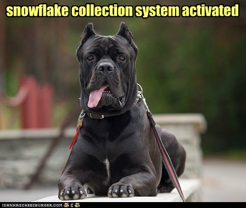 dogs,snowflake,snow,tongue,mastiff