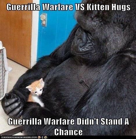 Guerrilla Warfare VS Kitten Hugs  Guerrilla Warfare Didn't Stand A Chance