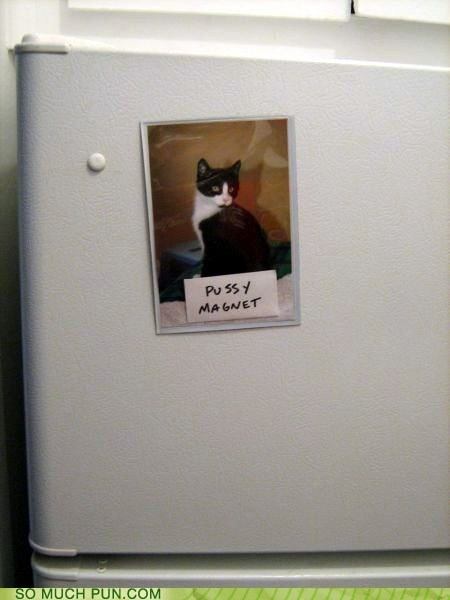 magnet,cat,double meaning,literalism