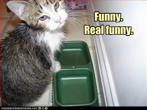 funny,empty,food bowl,dish,hungry,Cats,captions
