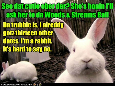 Rabbits got monogamy issues