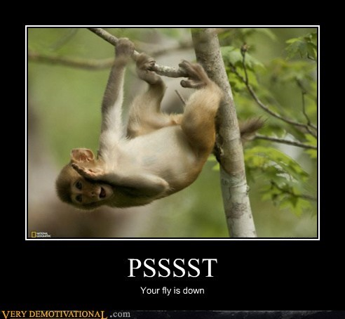 monkey,helpful,fly,whisper