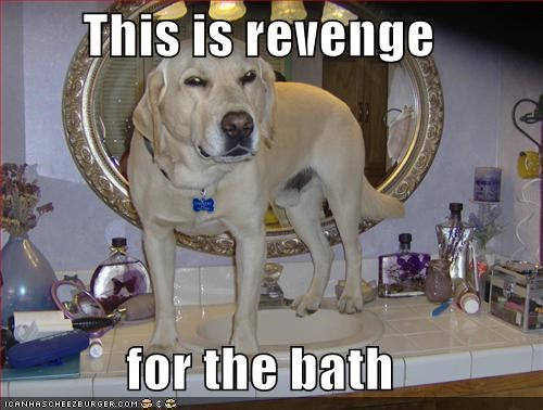 This is revenge  for the bath