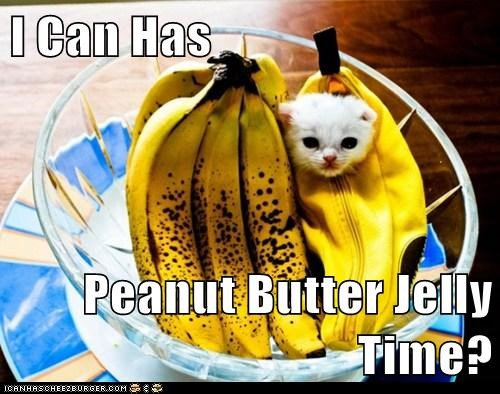 I Can Has  Peanut Butter Jelly Time?
