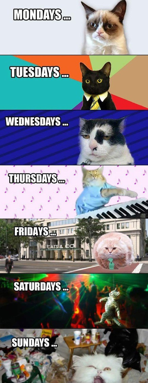 lolcats,Grumpy Cat,Business Cat,party cat,clubbing cat,days of the week