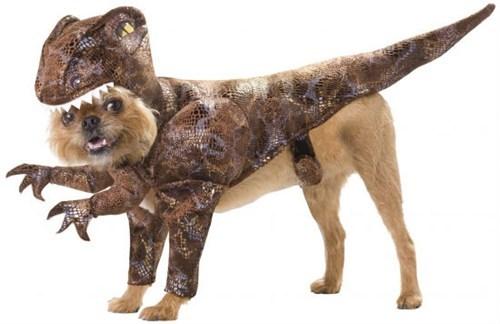 dog costumes,Raptor