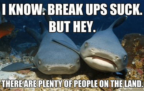 sharks,relationship,break up,fish in the sea