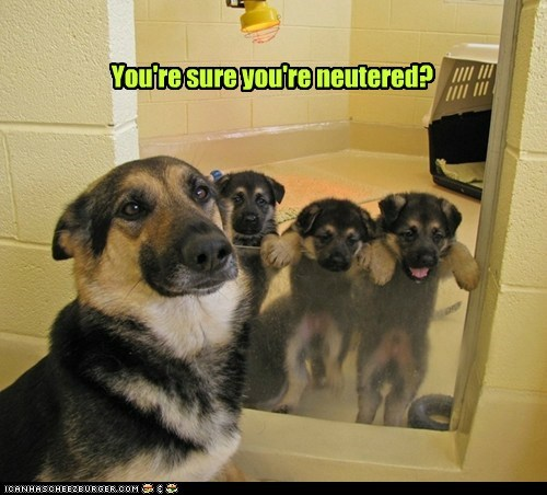 You're sure you're neutered?