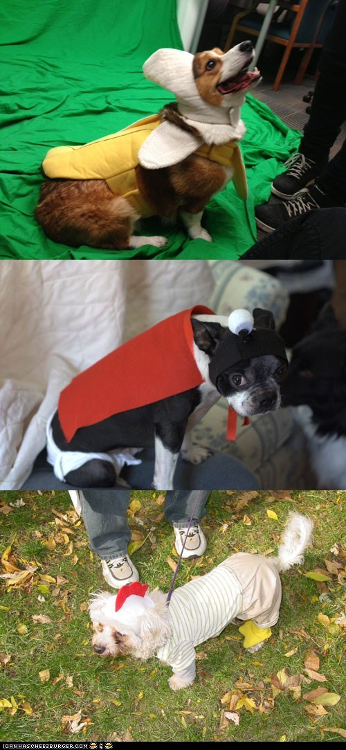 Send Us Photos of Your Pets in Halloween Costumes!