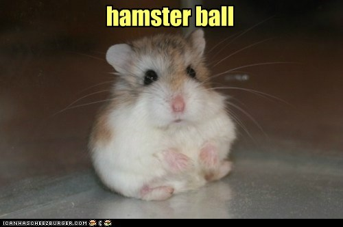 Or possibly hamster oblate spheroid