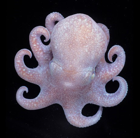 Creepicute: Smiley Octopus