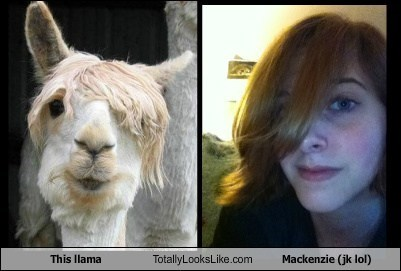 This llama Totally Looks Like Mackenzie (jk lol)