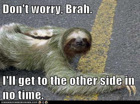 dont worry,road,no time,slow,other side,sloth