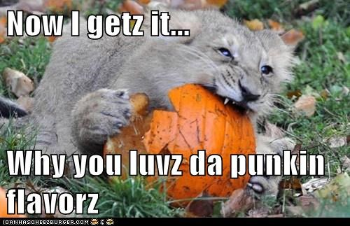 Now I getz it...  Why you luvz da punkin flavorz