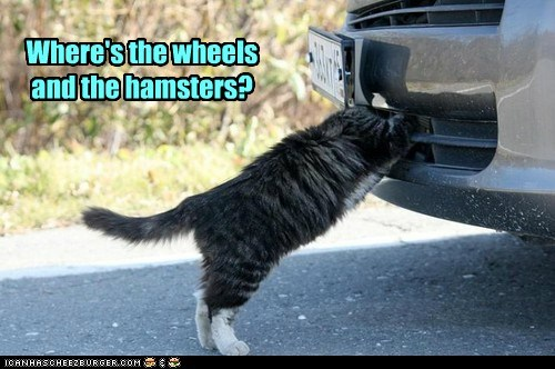engine,wheel,hamster,car,Cats,captions